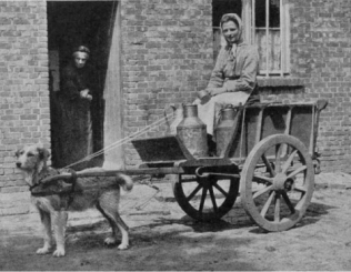 dutch-belgian-dogcart