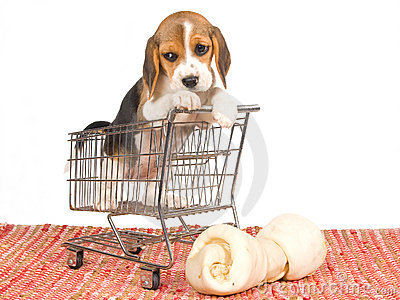 beagle-puppy-mini-shopping-cart-10051360